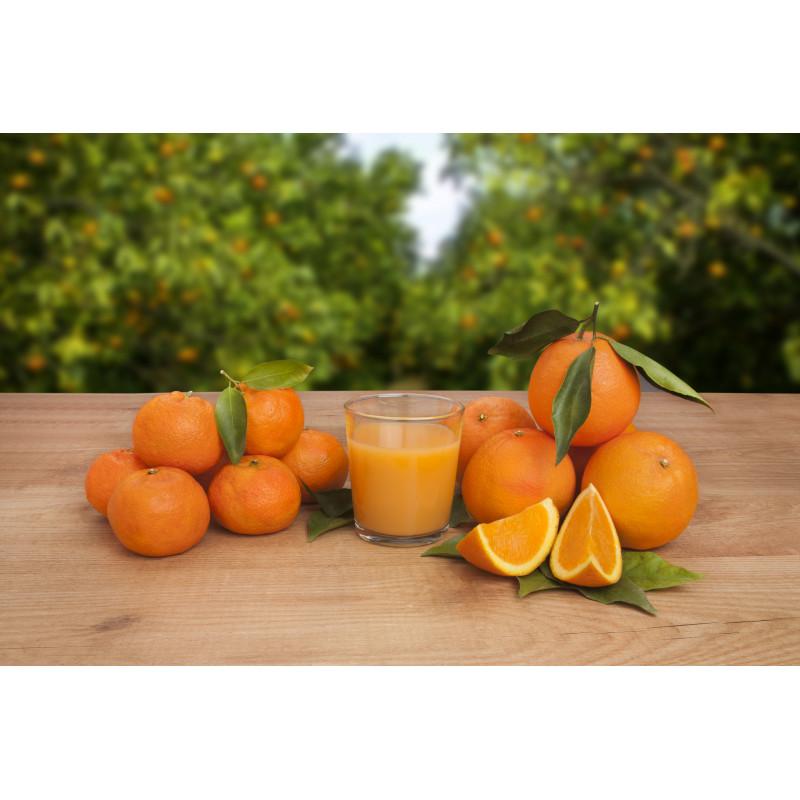 Naranjas / Taronges / Oranges