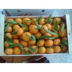 Mandarin oranges (kg)